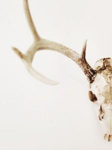 antlers-984538_1280